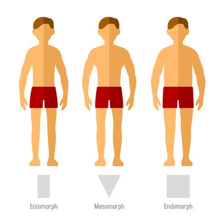 silueta humana: Tipos Hombres Cuerpo en Flat Style. Vectores