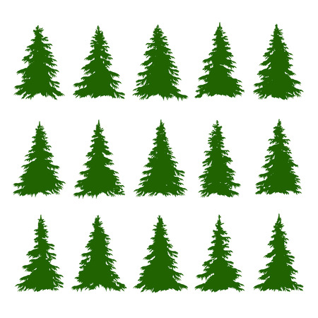 conifers: Conifer Trees Set on the white background for Making Forest Backgrounds. illustration