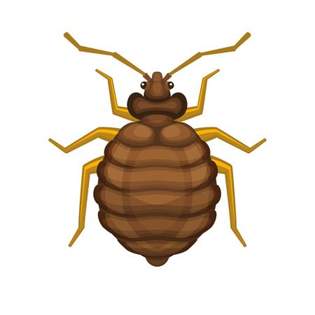 bedbug: Bug Bedbug on White Background. illustration Illustration