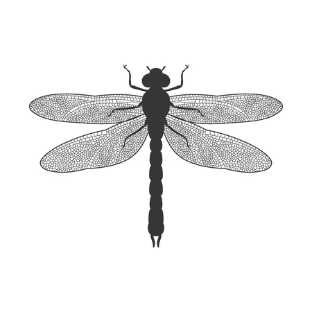 dragon fly: Silhouette of Dragonfly