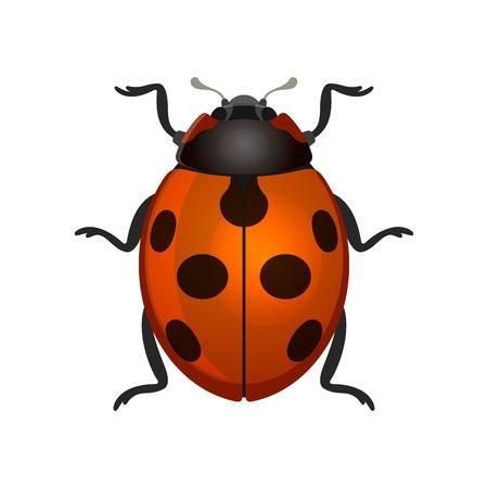 black and white: Red Ladybug on White Background. Vector Illustration