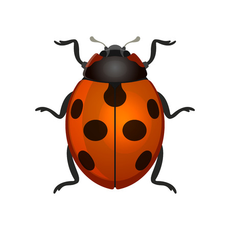 Red ladybug illustration.