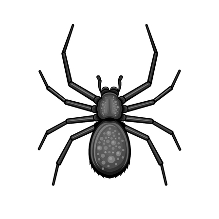 Spider black arachnid icon design vector illustration Illustration
