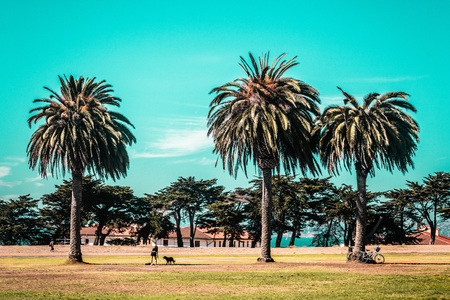 Photo of Palm Trees in San Francisco