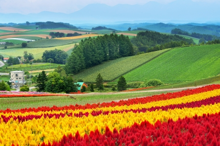 biei: Colorful Flower over Hills in Biei, Japan Stock Photo