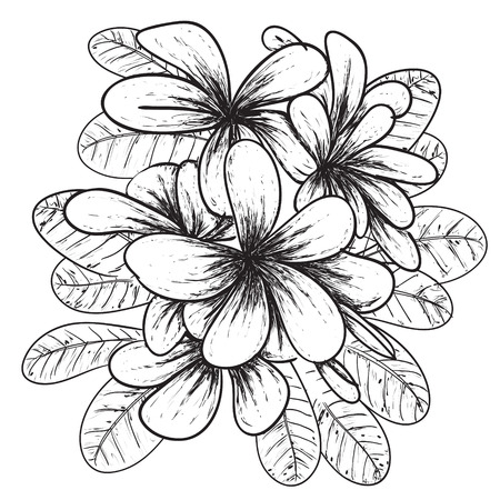 Vector illustration of Plumeria flower in simple black and white doodle