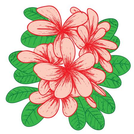 Ilustración de vector de flor de Plumeria en dibujo de doodle coloreado