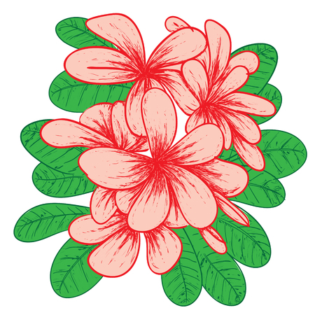 Vector illustration of Plumeria flower in colored doodle drawing