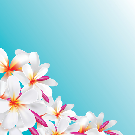 Vector of Plumeria flower background in realistic gradient mesh illustration