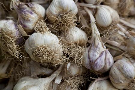 High resolution garlic background. Shallow depth of field. Stock Photo - 10886162