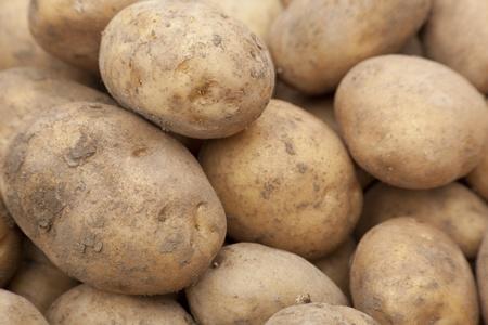 Close up shot of organic fresh raw potatoes. Shallow focus. Stock Photo - 10886183