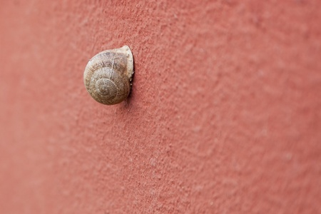 Snail on pink colored wall surface. Focus is on the snail. Stock Photo - 10886154