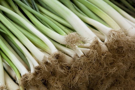 Close up shot of fresh spring onions at the market. Natural light, shallow focus. Stock Photo
