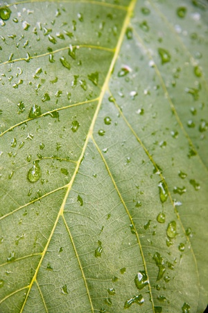 Green leaf with water drops. Shallow depth of field. Stock Photo - 11084099