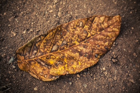 Dead walnut leaf fallen on ground.