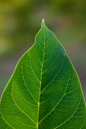 Detailled green leaf close up shot. Stock Photo