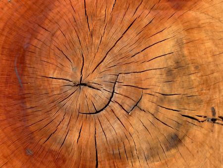 wooden trunk of