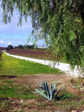 rural landscape and aloe vera plant in Alentejo region Stock Photo - 659564