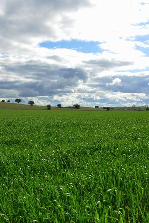 plain of the alentejo with vast opened fields of wheat with some dispersed trees for the immense region. photo