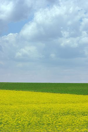 spaciousness: Landscape of Yellow And Green Field