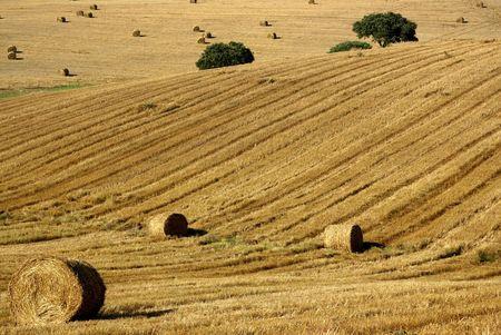 alentejo: Hay bales in Alentejo field