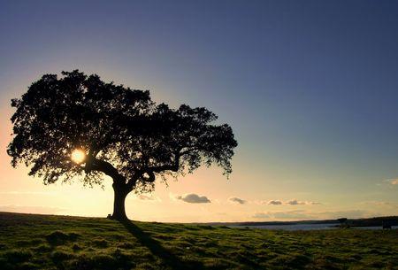 alentejo: Oak tree by a lake in a very dry portuguese region.