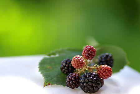 brambleberry: Moras silvestres en los campos de la regi�n de Alentejo, Portugal.  Foto de archivo