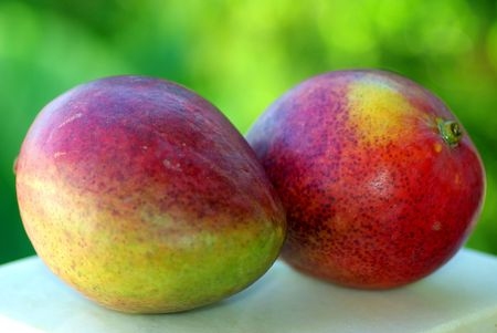 Two mangoes fruits are isolated on green background. Stok Fotoğraf