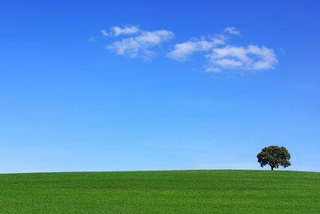 Isolated tree in the green field.  Stock Photo