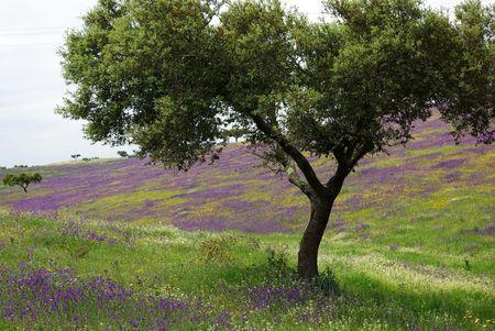 Colored Field of alentejo region, Portugal. photo