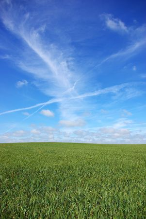 Field of wheat under a blue sky. Stock Photo - 2997271