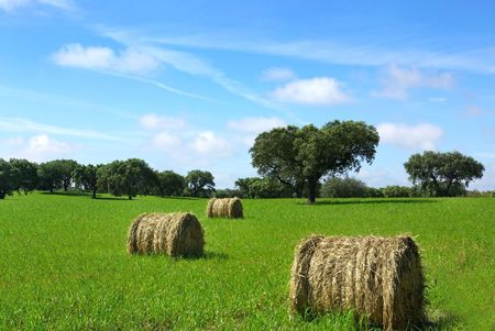 Hay  bayle in the field of Portugal. photo