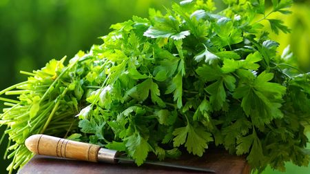 кинза: Fresh coriander (cilantro) herb and knife
