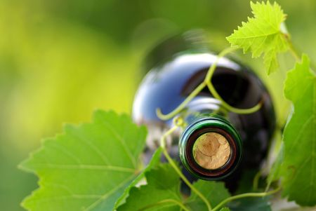 Bottle of red wine and green leaves. photo