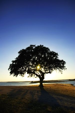 Tree in Alqueva Lake, Portugal. Stok Fotoğraf