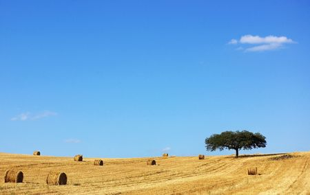 alentejo:  Mediterranean landscape from Alentejo, Portugal. Stock Photo