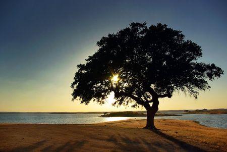river trunk: Tree in Alqueva Lake, Portugal. Stock Photo