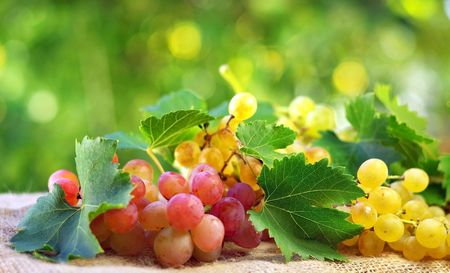 vinery: Grappes and leaves.