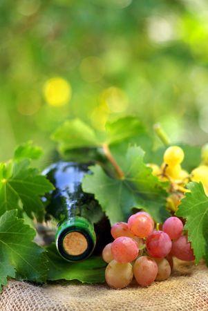 Flasche Wein und Grappes. Standard-Bild - 5761323