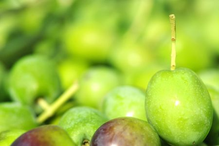 agrarian: Closeup of green olives. Stock Photo