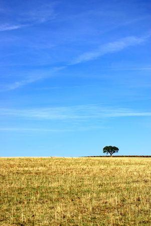 alentejo: Field of alentejo region, Portugal
