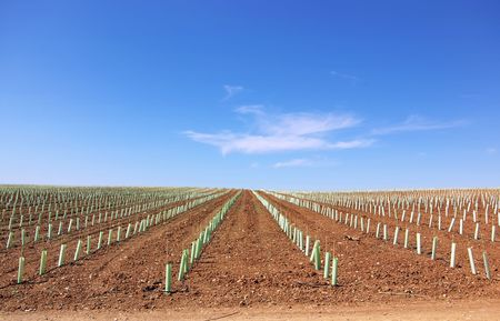 Texture of agricultural field. Stock Photo - 7329246