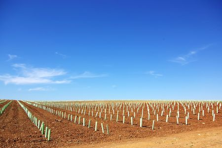 Texture of agricultural field. Stock Photo - 7329243