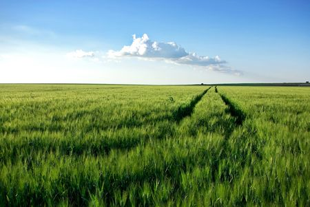 Wheat field at Portugal. Stock Photo - 7329245