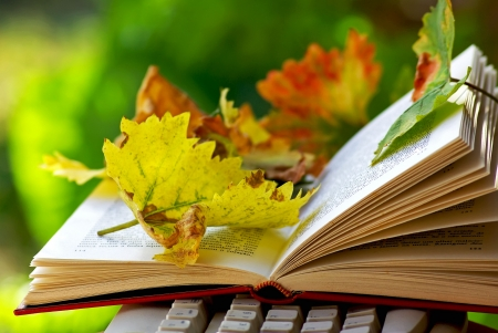 Leaves on open book. photo