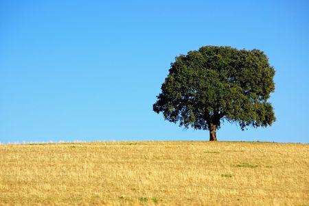 Oak tree at alentejo field, Portugal. Stok Fotoğraf
