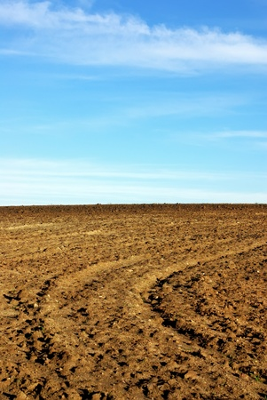 Texture of cultivated field and blue sky. Stock Photo - 8521392