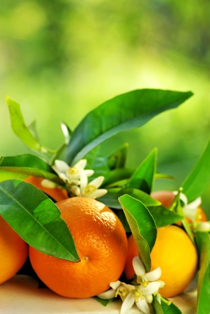 Orange fruits, green leaves and flowers. Stock Photo - 9347967