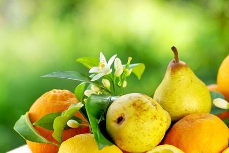 rocha: Rocha pear and oranges.
