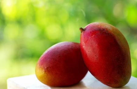 Two tropical mango fruits.